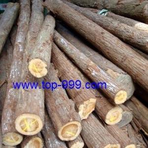 树木的木材一般什么用途